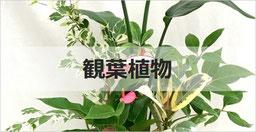 観葉植物・インテリアグリーン