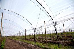 Magnifica fotografía de industria alimenticia, invernadero.