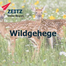 Zeitz, Tiere, Wildtiere, Gehege, Burgenlandkreis, Natur