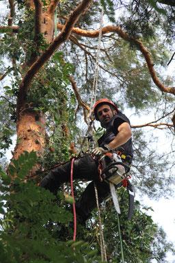 Sicherheit für den Kletterer und schonend für den Baum