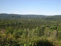 Uryu Experimental Forest