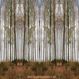 wald,spiegel,photoshop,cs 6,textur,digitale,fotokunst,kunst,digiart