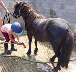Nos poneys adorent la douche
