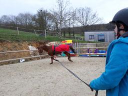 Longer un cheval à proximité de Montbard et Semur en Auxois