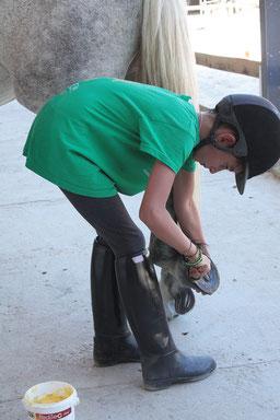 Les stages permettent d'apprendre les soins aux poneys