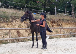 Travail à pied avec un cheval à proximité de Montbard et Semur en Auxois