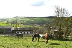 Des prés où vivent les chevaux toute l'année