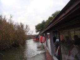びわ湖観光船で西の湖の芦原を・・・