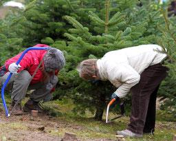 Weihnachtsbaumschlagen für die ganze Familie