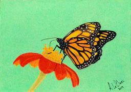 Dessin crayons de couleur papillon monarque