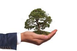 La main d'un homme tient un arbre pour la sauvegarde de l'environnement, la protection de la faune et de la flore