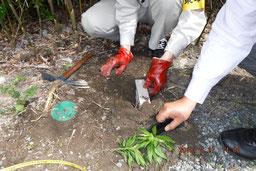 集合住宅の環境管理サービス/シロアリ対策