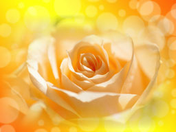 愛と光【日常生活の変容】
