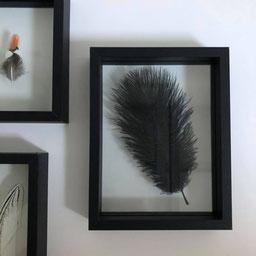 cadre plume noire ; déco murale ; cadre en bois