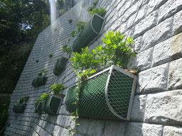 植栽:フジ、ヘデラ類