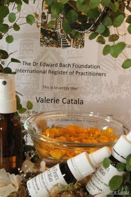 Consultation Fleurs de Bach Occitanie Saint Gaudens Bien être apaisement stress émotions élixirs floraux