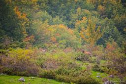 lupo orso camoscio cervo lontra
