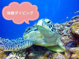 タクダイブ石垣島の体験ダイビングページ