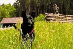 Aktiv dank Hundephysiotherapie in Leipzig