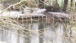 mare aux canards sous la neige chambres d'hôtes de ker holen à saint-lyphard
