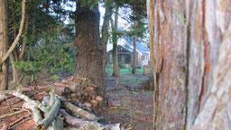 le jardin et le petit bois en hiver à chambres d'hôtes de ker holen à saint-lyphard