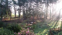le jardin et la mare en hiver à chambres d'hôtes de ker holen à saint-lyphard