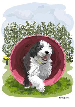 disegno-drawing-bobtail-cane-dog-digital-art-agility_tubo-rosa-giardino