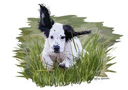 disegno-drawing-ritratto-cane-setter inglese-puppy-salto-erba-alta-digital-art-ritratto-immagine
