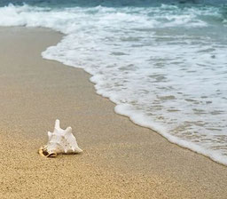 spiagge ischia