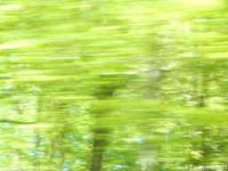 Zarahzetas Rätselbilder mit Momentaufnahme Wald