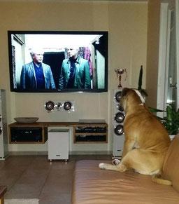 Bulldogge und Miesepeterwetter