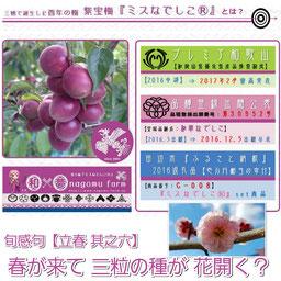 清明 プレミア和歌山認定 紫宝梅 和 夢 Nagomu Farm
