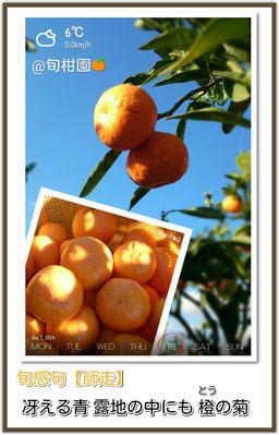 旬感句【師走 其之壱】 冴える青 露地の中にも 橙の菊