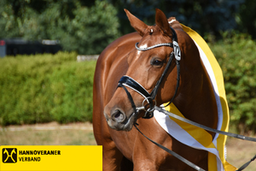 Hannoveraner Verband, Hanoverian Association, horse breeding, riding horses, sport horses, dressage horses, jumping horses, hobby horses, laisure horse, eventing horse, horse auction, horses for sale, horse breeder, stallion, broad mare, foal, colt, GHI