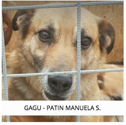 GAGU - PATIN MANUELA
