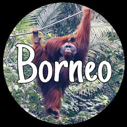 Reiseberichte Borneo
