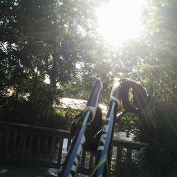 Nordic Walking Stöcke lehnen an einer mit Raureifbeschichteten Holzbank vor einem Weg bei Sonnenaufgang