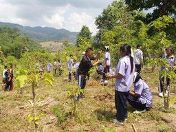 タイでの植林活動の様子