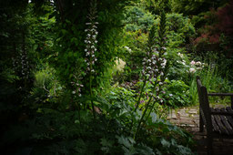 北山緑化植物園 2017     Kitayama  Botanical garden   Nishinomiya