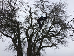Obstbaumschnitt bei Biberach an der Riss