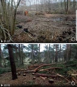 Screenshot eines Waldphotos nach der Durchforstung