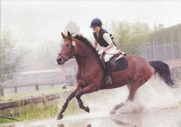 Pferde-Logbuch & Leitfaden zur Gesunderhaltung des Pferdes - Husmann & Bohm GbR - Frank Bohm & Anja Husmann