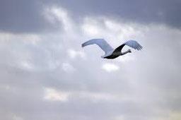orientatiuon de l'oiseau migrateur
