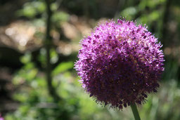 plante sensible au champ magnétique