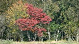 De eerste herfstkleuren