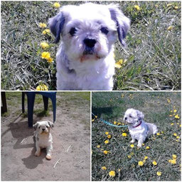 Adoptiert 2012