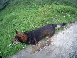 Alpen E5 wandern Hund