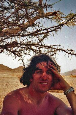 unter einem Dornbusch im Sinai