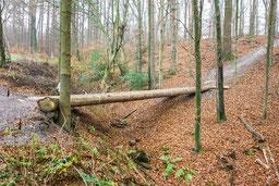 so sieht es derzeit im Wald aus (efm)