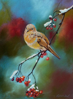 Wacholderdrossel, Pastell,Wintervogel